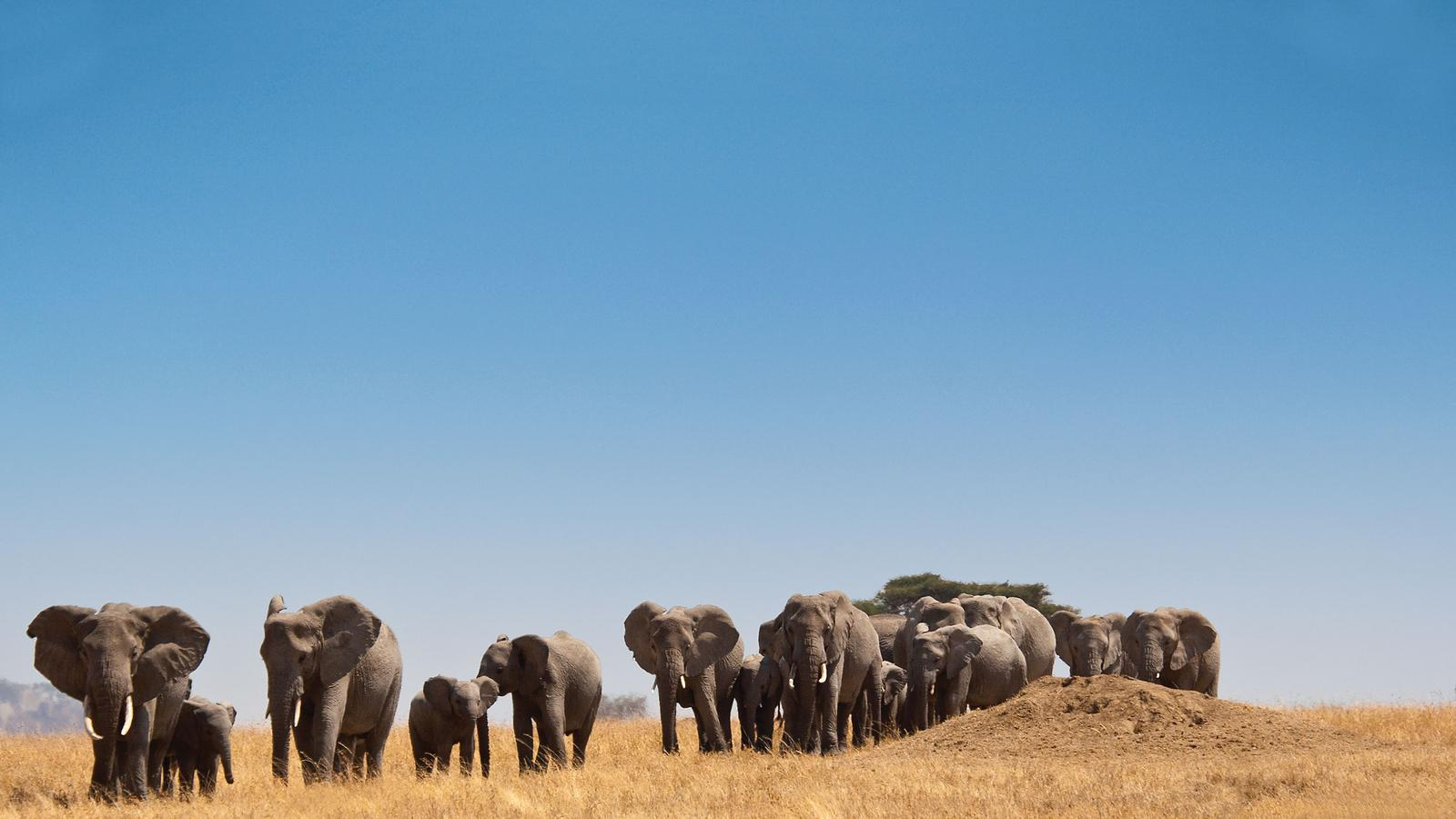 National Geographic Journeys - Africa
