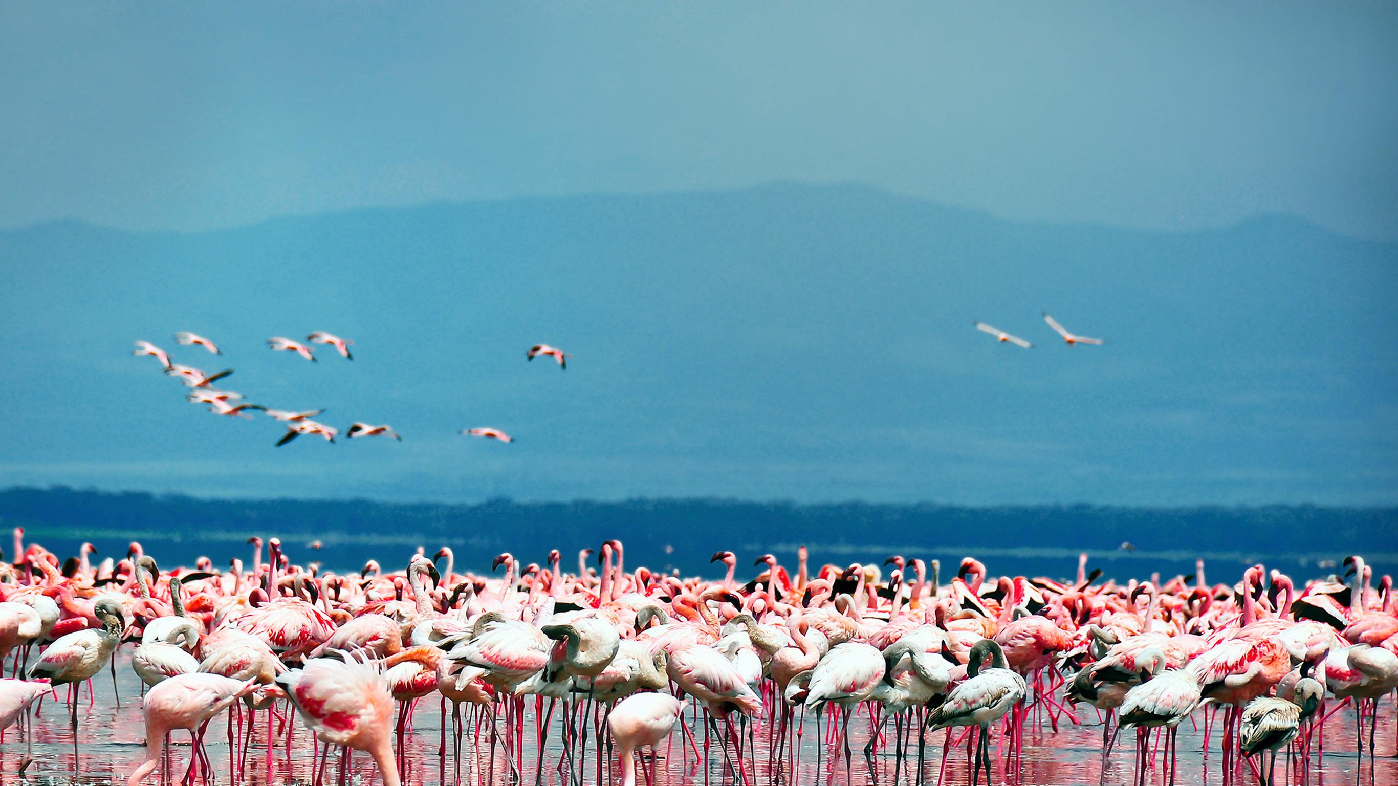 kenya-overland-adventure