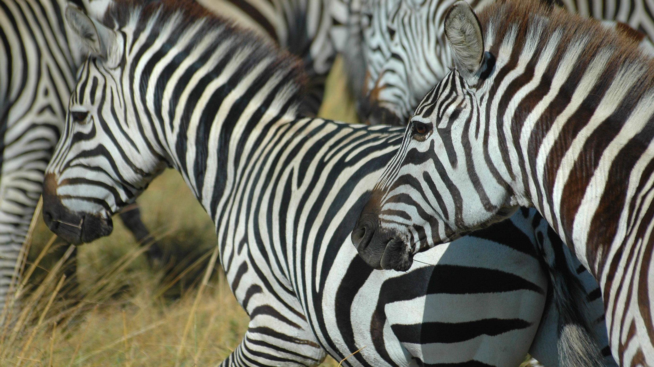kenya-tanzania-overland