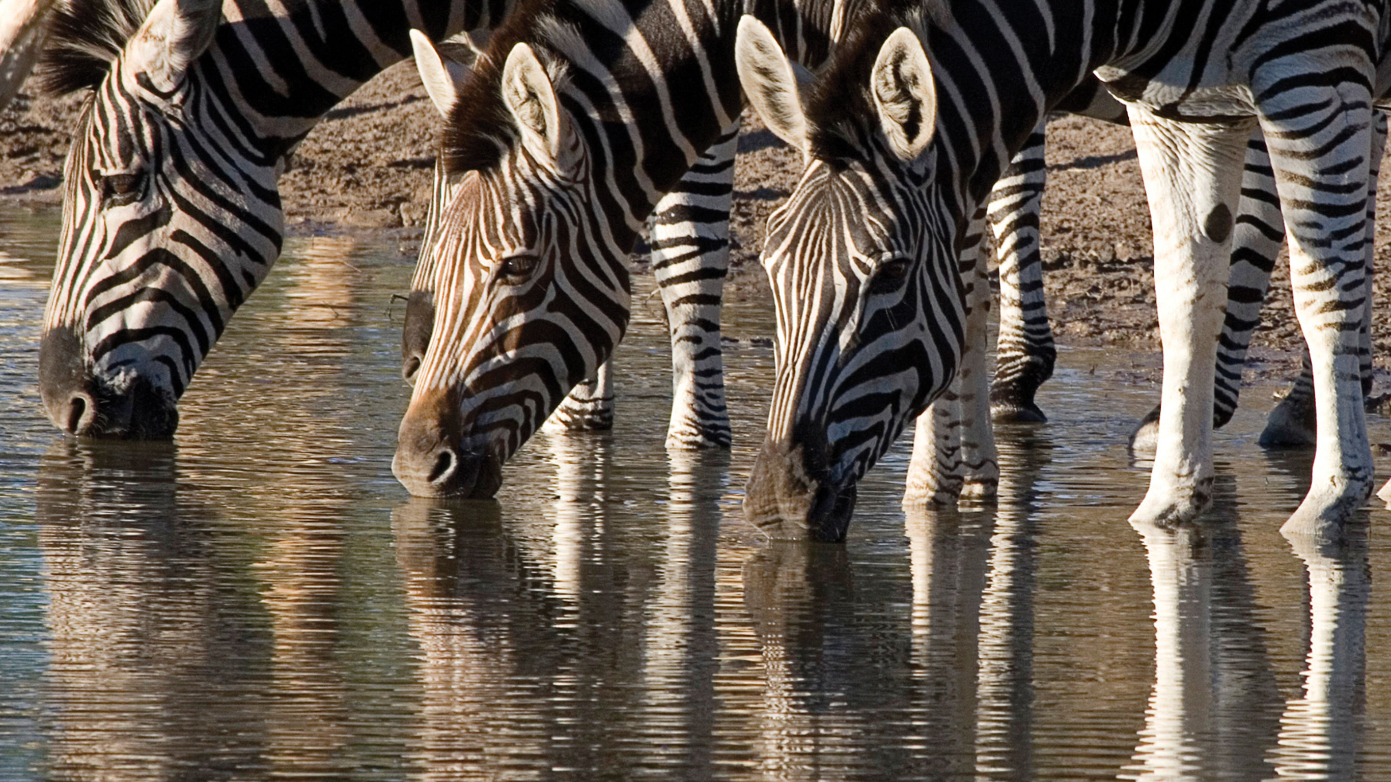 highlights-of-south-africa-zambia-botswana