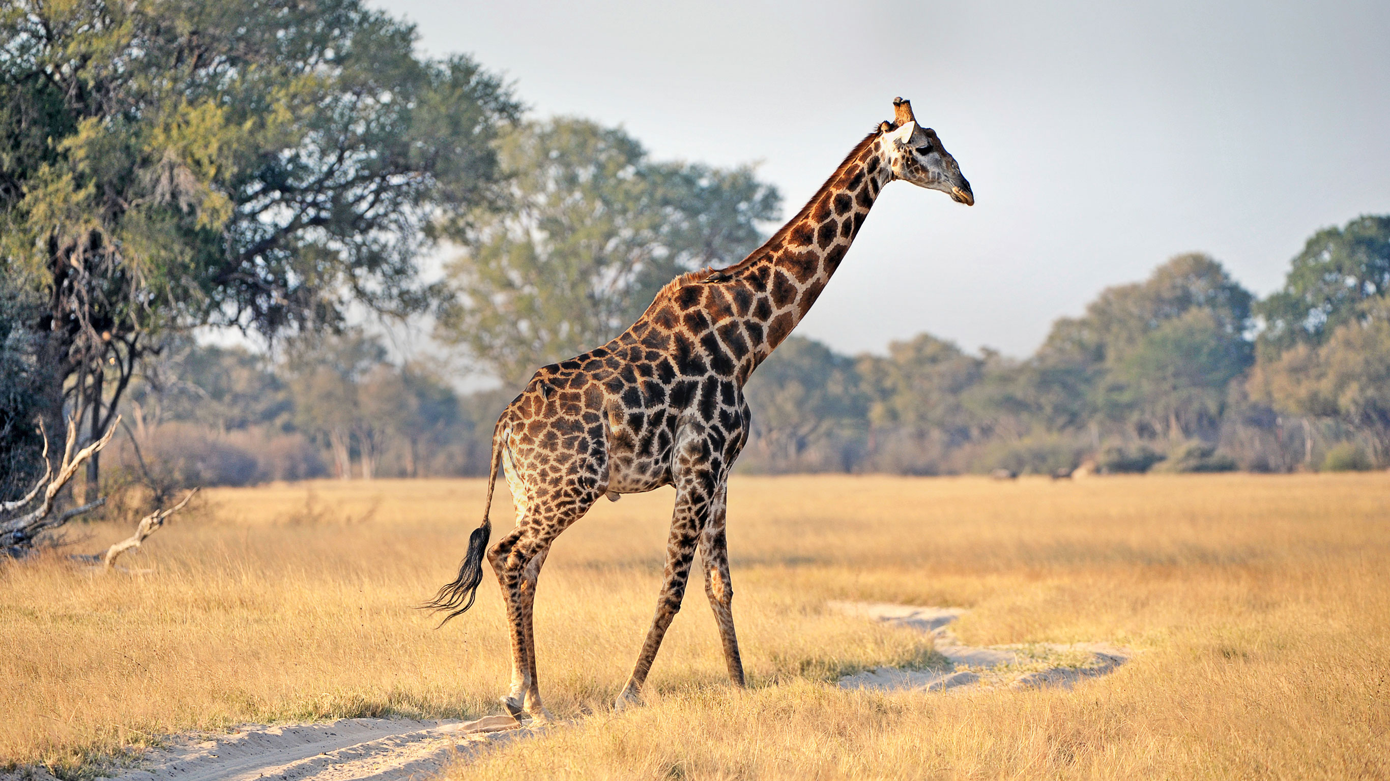kruger-falls-zimbabwe