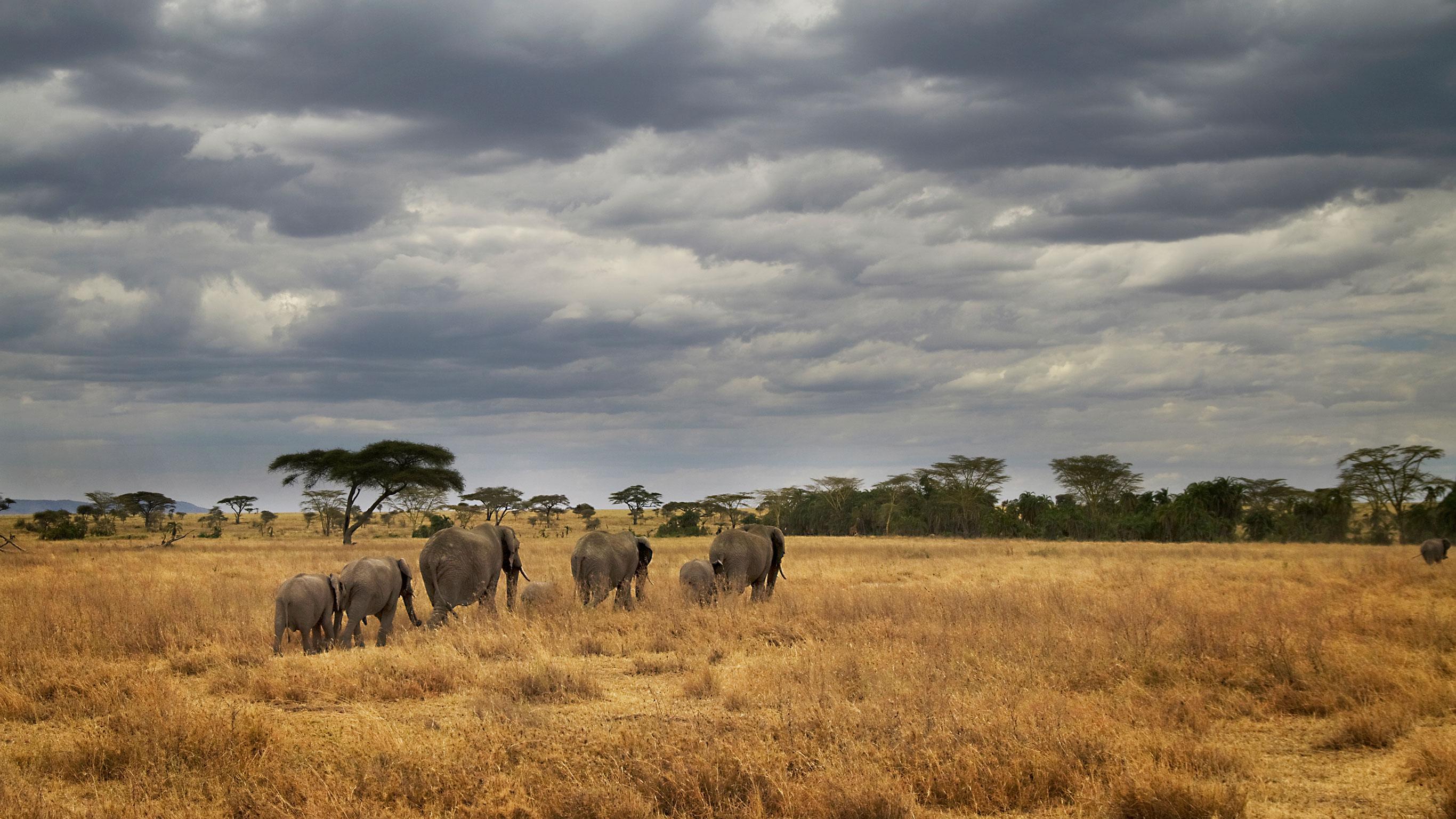 masai-tanzania-camping-safari