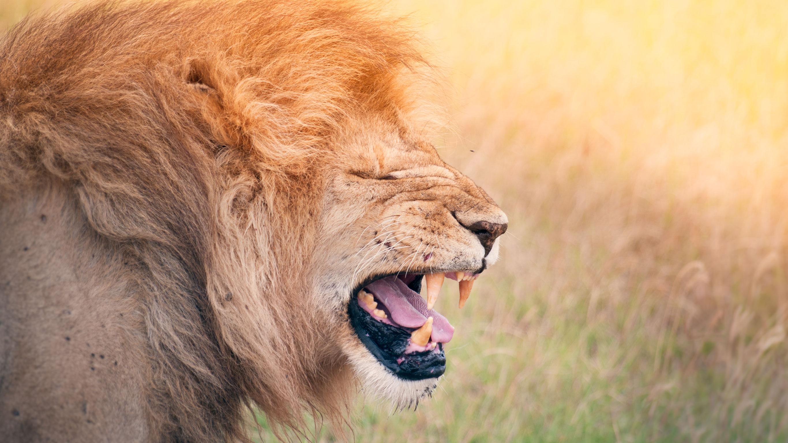 kenya-tanzania-camping-safari