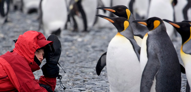 Falklands, South Georgia & Antarctic Islands