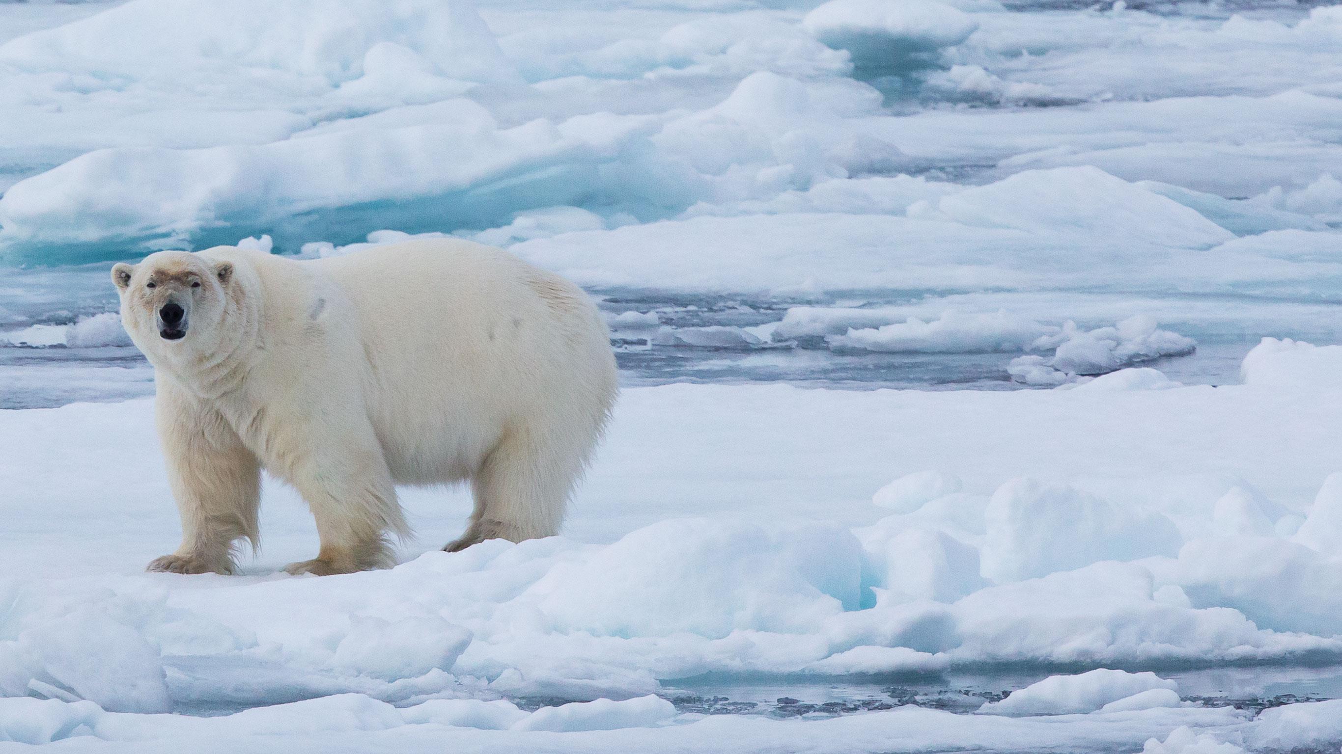 realm-of-the-polar-bear-in-depth
