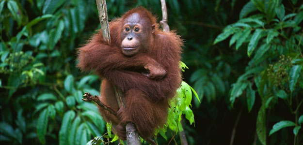 Wonders of Borneo