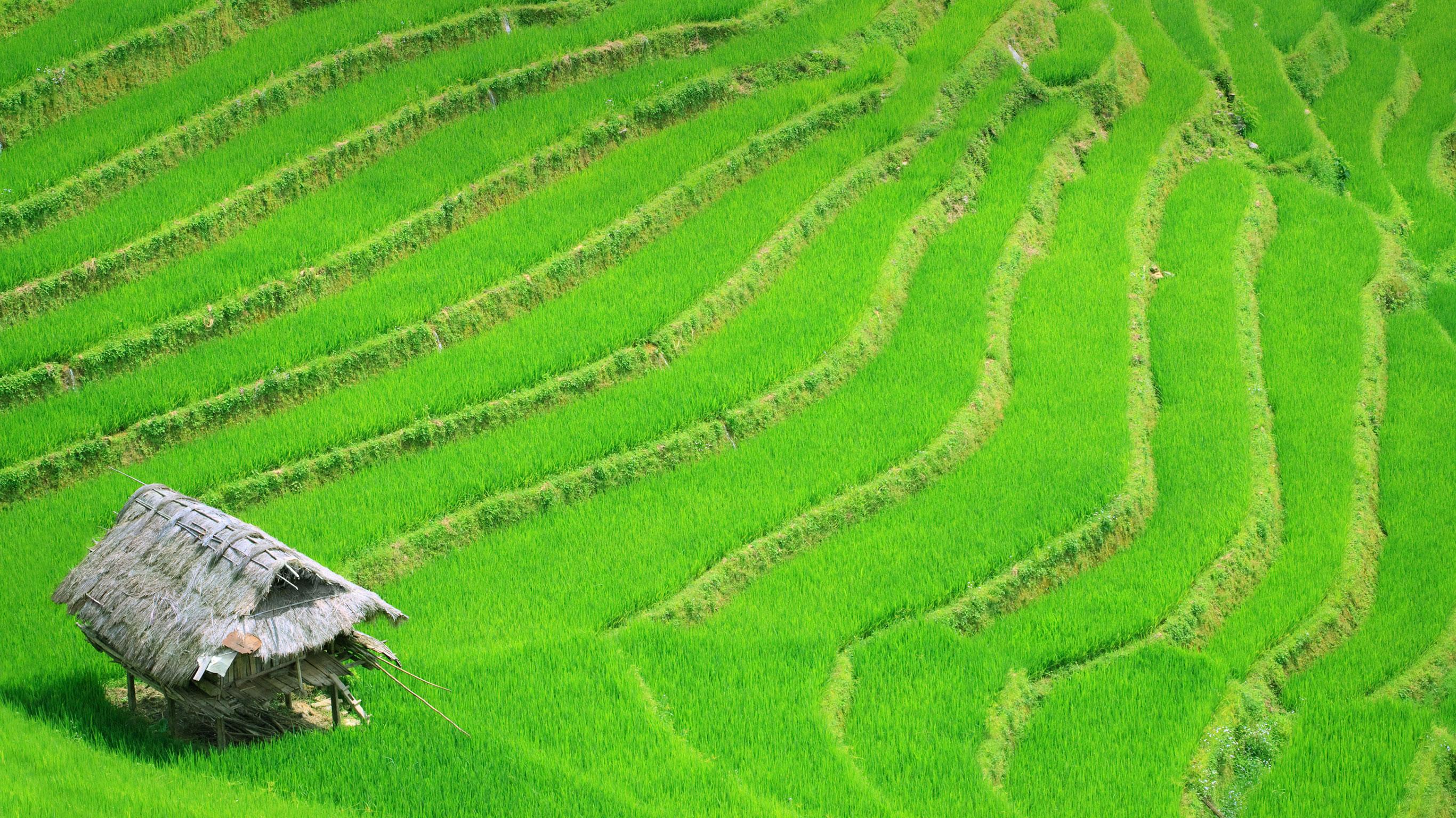 timeless-vietnam