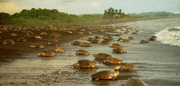 Turtles & Tortuguero