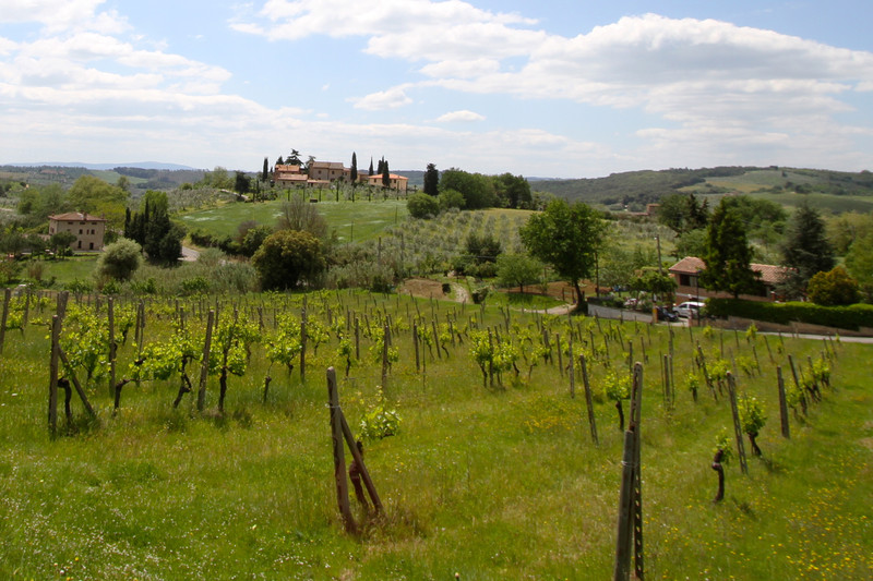 Local Living Italy–Tuscany San Gimignano