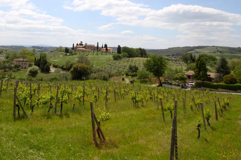 Local Living Italy–Tuscany San Gimignano