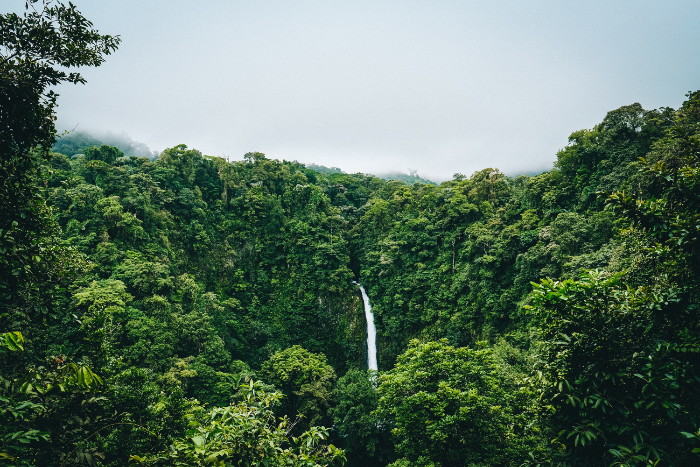 feel refreshed gazing on cloud forests, rushing white water and thick jungle canopies