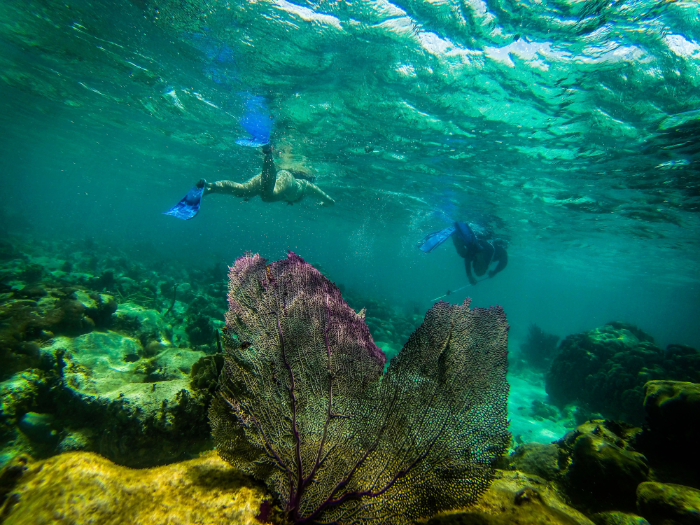 snorkellers looking for bottom-feeding nurse sharks in the Belize Barrier Reef