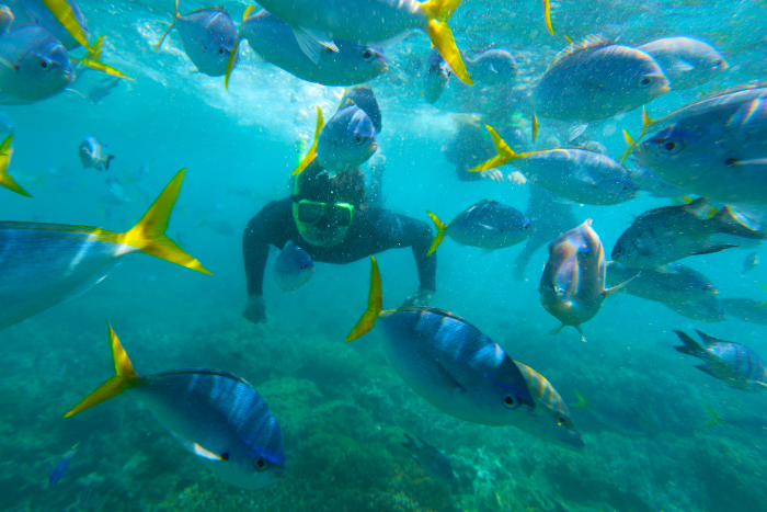 keep your eye out for majestic manta rays while surrounded by tons of colourful fish