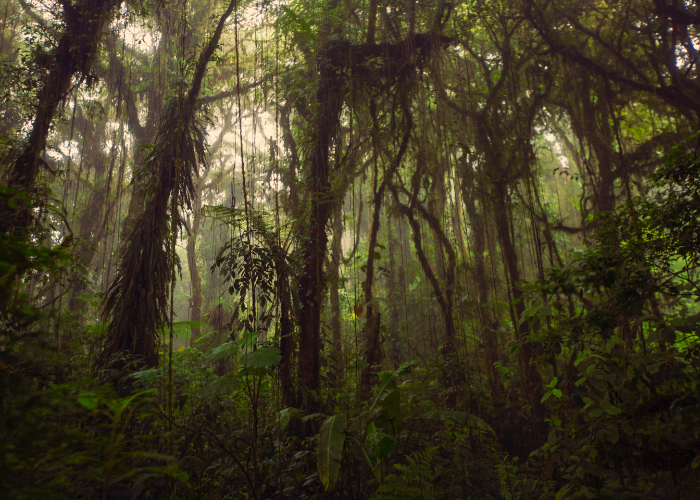 walk through nature's terrarium in the cloud forests like Monteverde