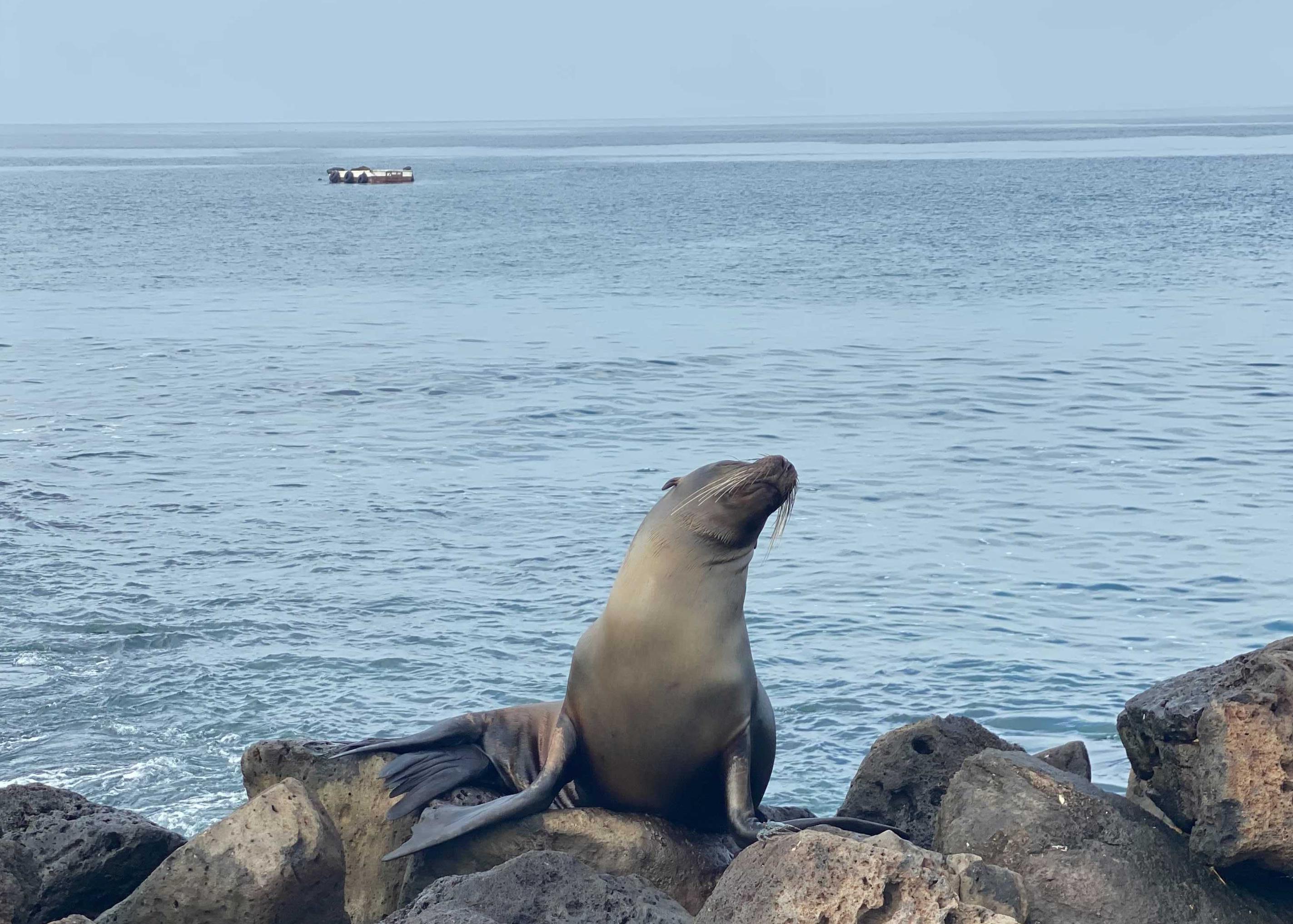 Galápagos sea lions lead an idyllic life on this small archipelago