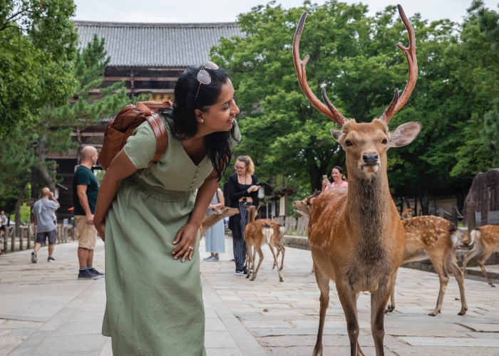 you know you're doing a good job if the deer in Nara nod at you
