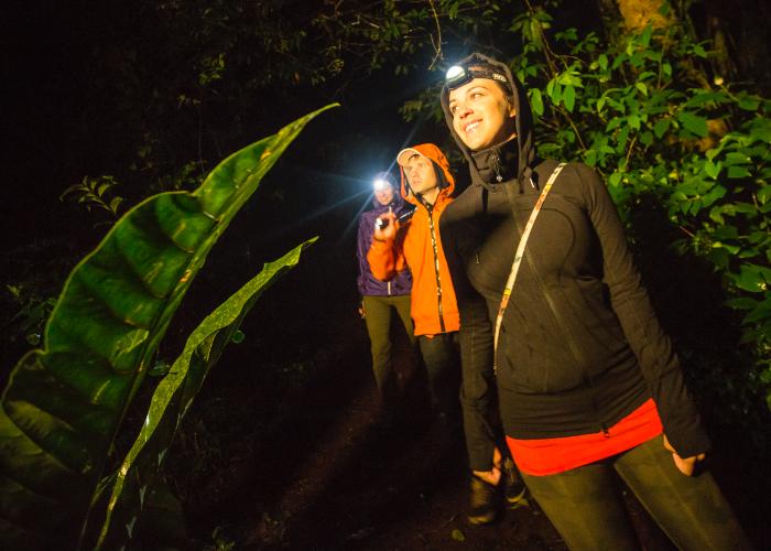 jungle night walk