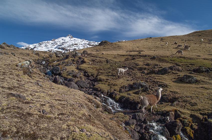 Llama crossing a mountain stream.