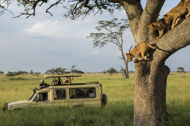 South Africa's Kruger Park.