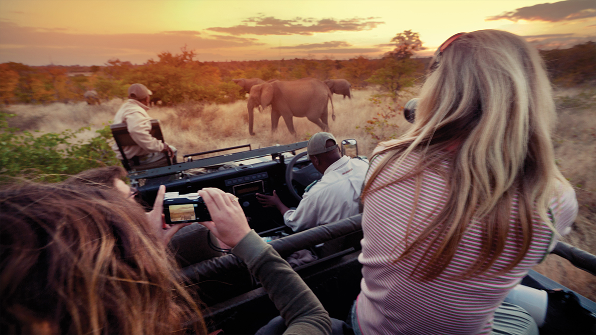 Photographing elephants from an open, private safari vehicle, at sunset in Kruger National Park, South Africa.