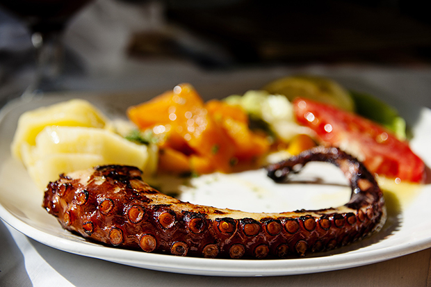 Dining on tender octopus tentacles in Athens, Greece, photo by Huey Cheah