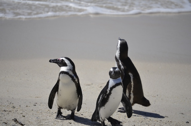 O G Penguin 10 Reasons you Should ...