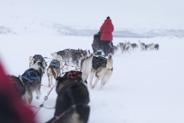 Dog sledding in Lapland!