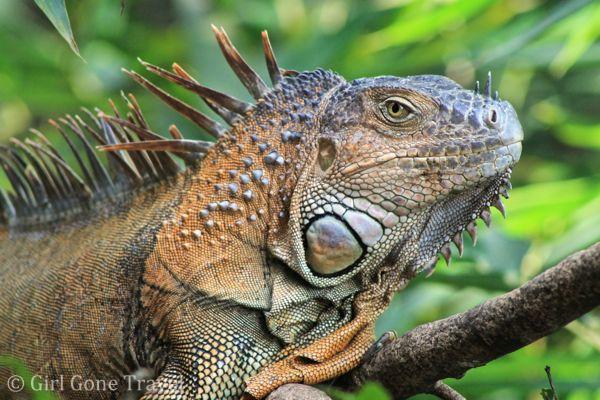 Iguana Tours Tamarindo