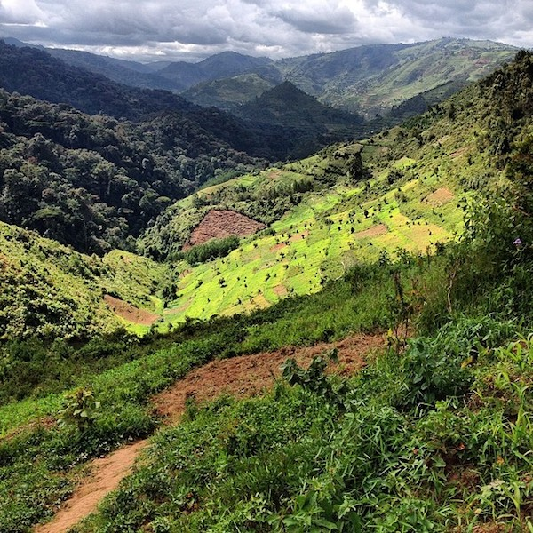 Lush fields and hills lead to the dense forest. This is Uganda.