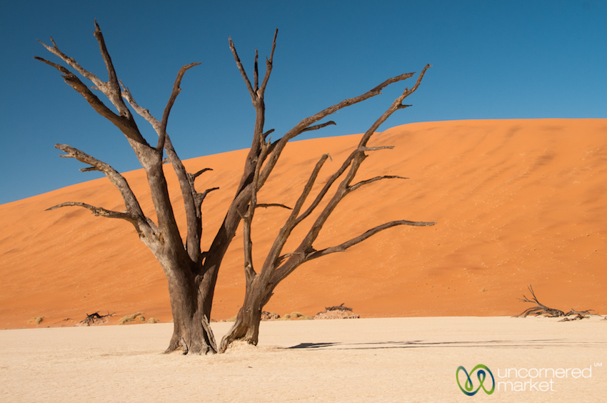 Iconic Deadvlei, a reminder of our world's constantly changing environments.