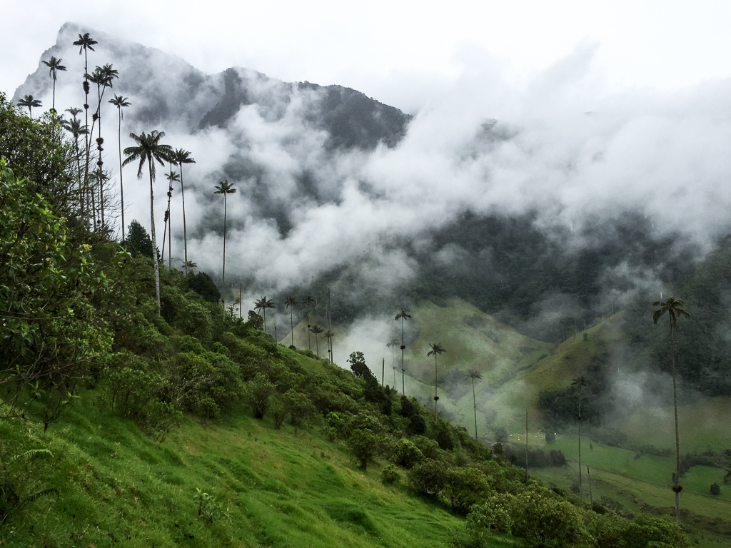 Trekking through the misty cloud forest in the Cocora Valley.