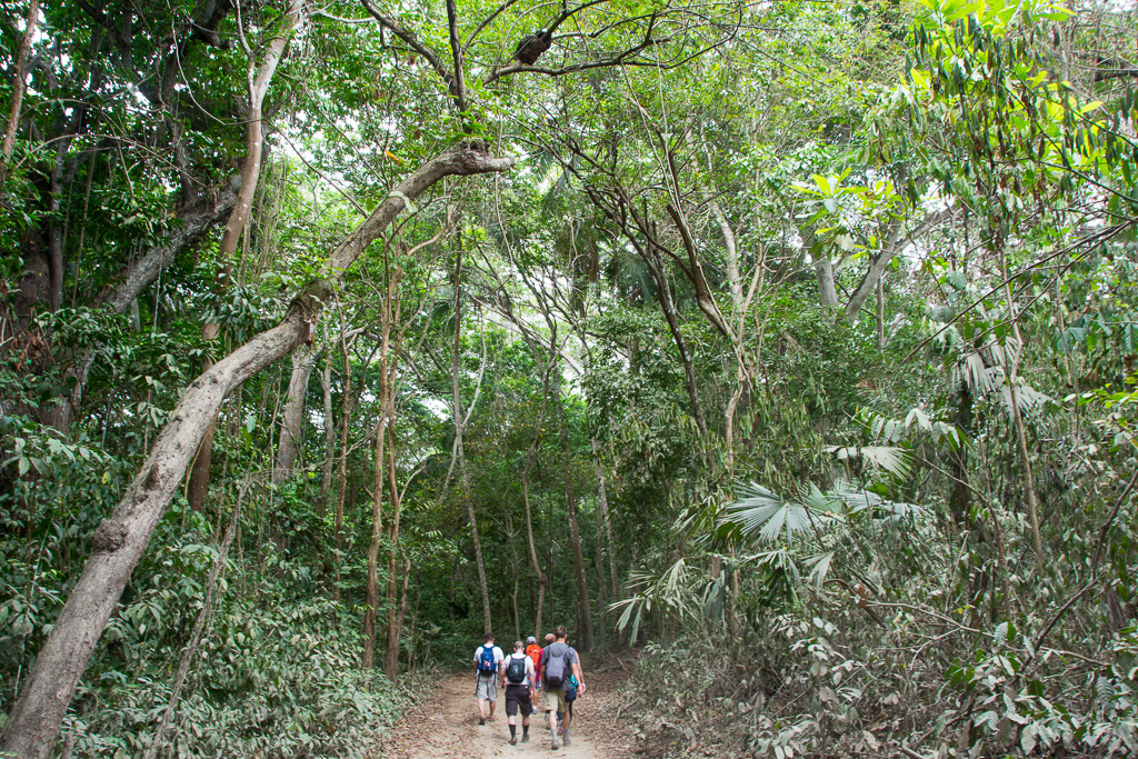 Morning trek through the tropical forest of Tayrona National Park.