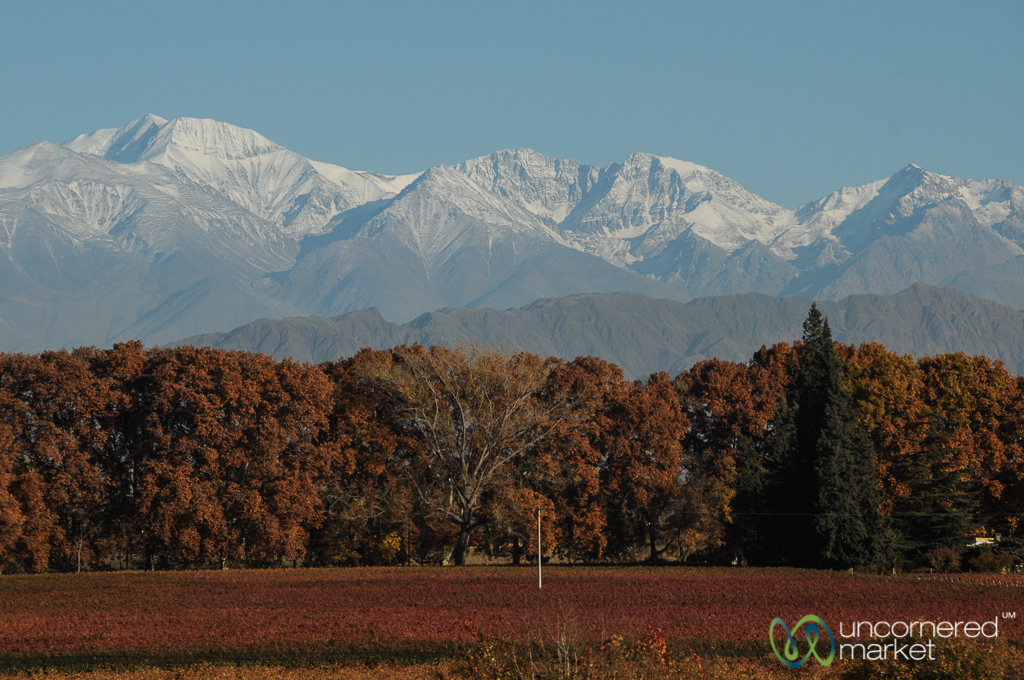 Mendoza vineyards under snow-capped Andean peaks.