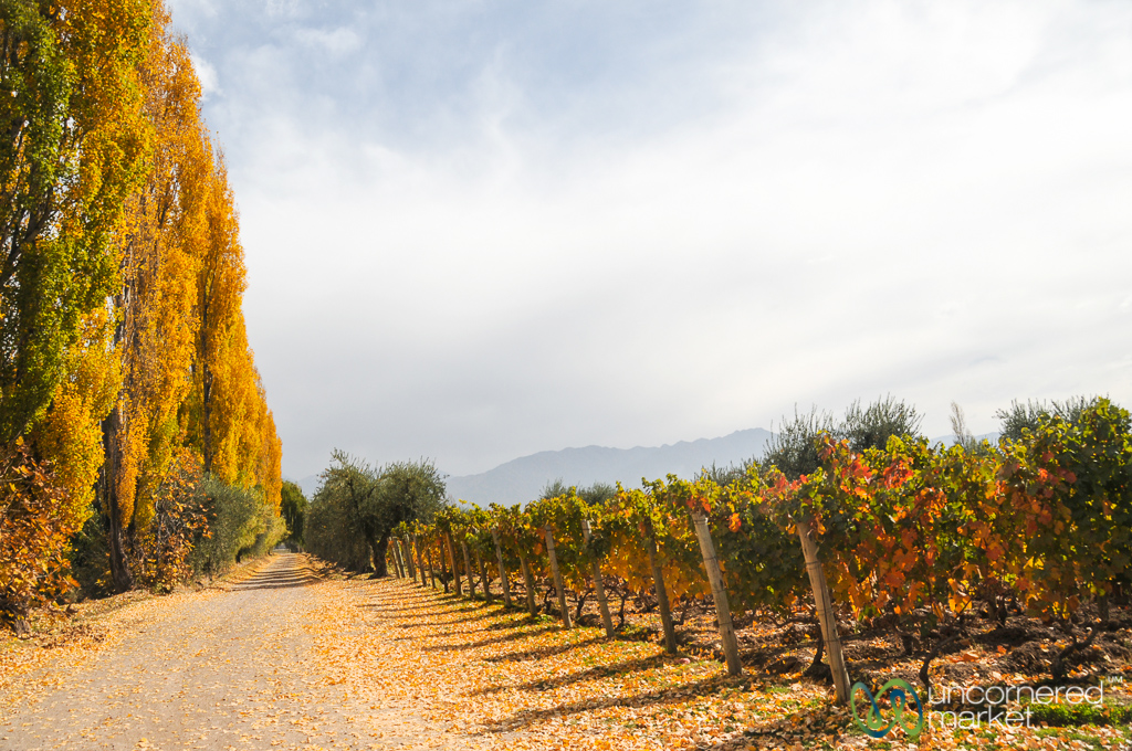 Autumn colours in the vineyards of Lujan de Cuyo.
