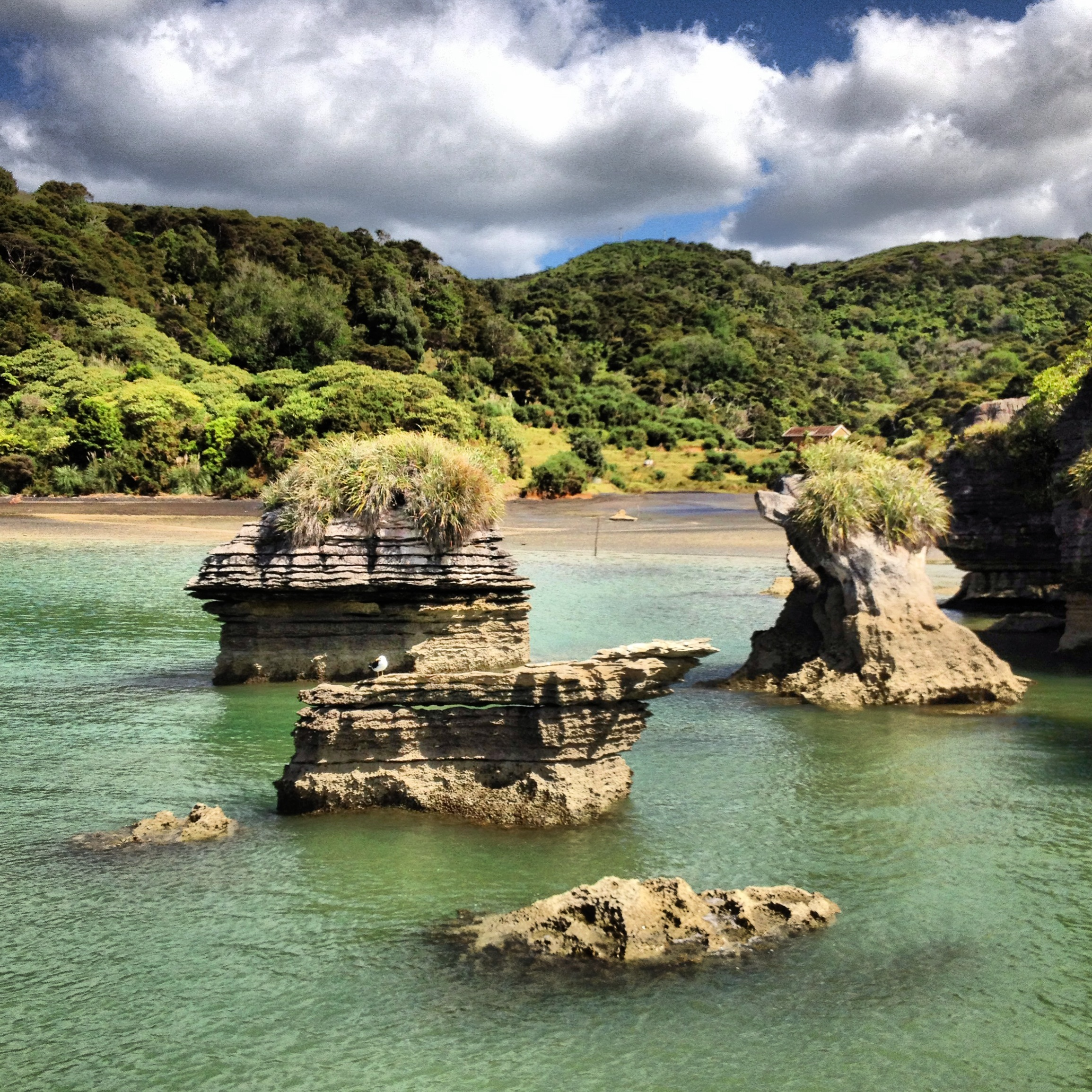 Floating Past The Pancake Rocks Near Raglan