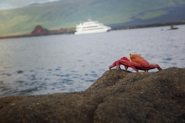 Sally Lightfoot, Galapagos