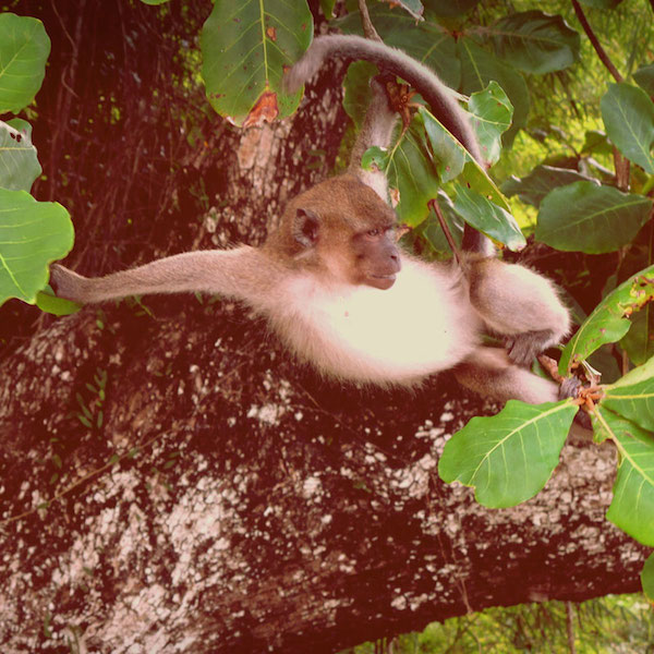 a monkey lounging in a tree