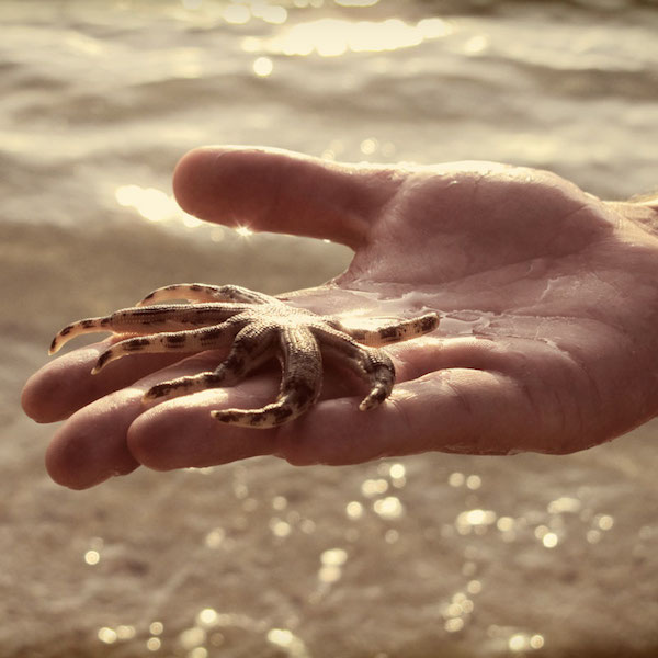 a starfish in the palm of a hand