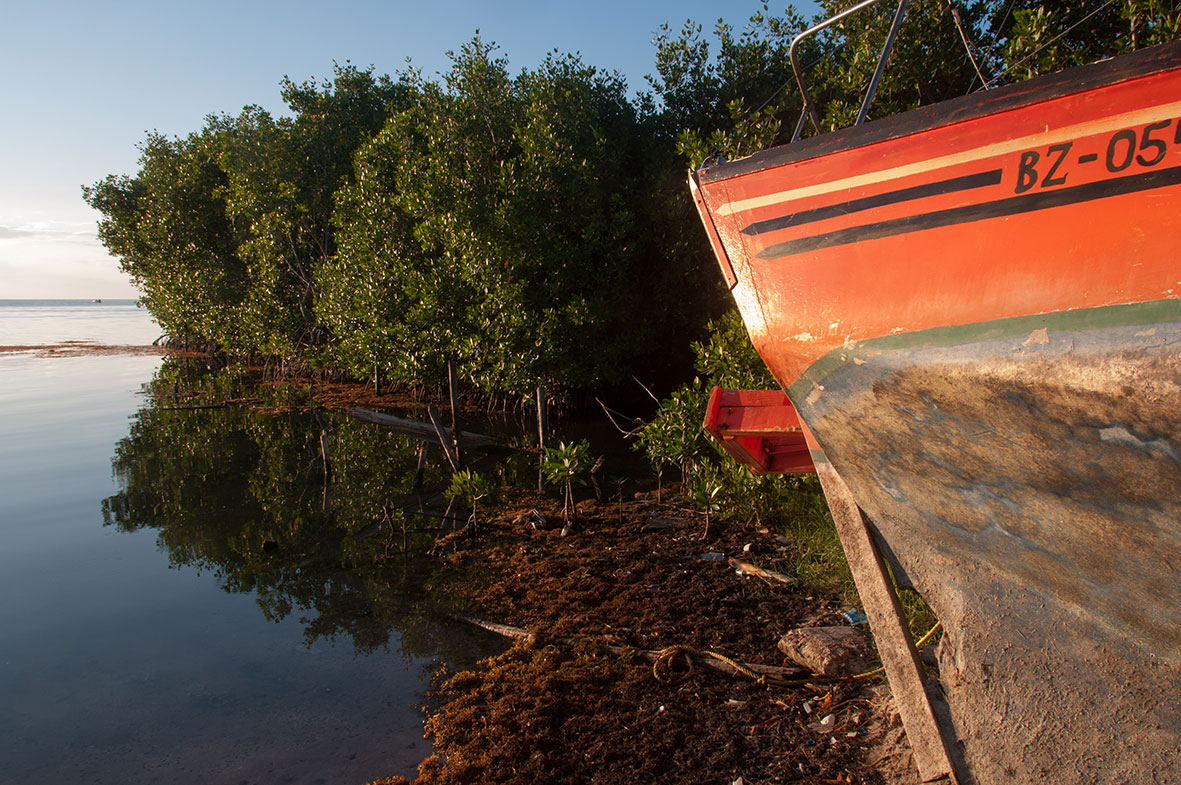 Mangroves line the coastline making it one of the defining characteristics of the islands in Belize.