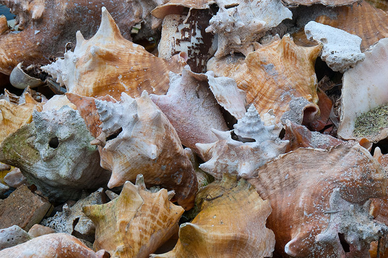 Conch is a very popular menu item all over the Caribbean. I found this pile of conch shells near a local dock for fishing boats. Note the holes in each shell, which is how the conch is extracted.