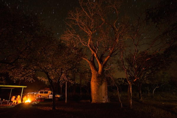 Camping at Mt Barnett Cattle Station under a large boab tree.