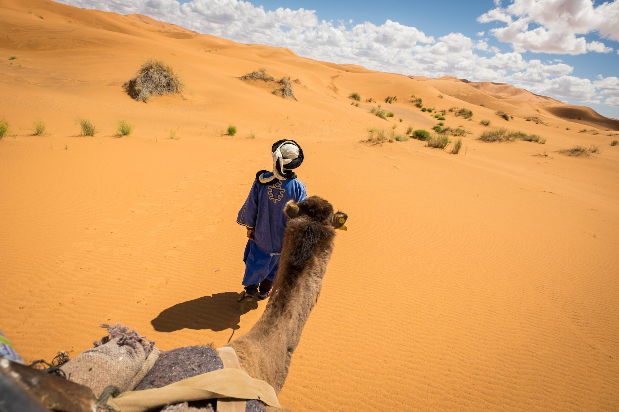 Camels are the main mode of transportation in the Sahara, carrying both supplies and people over long distances.