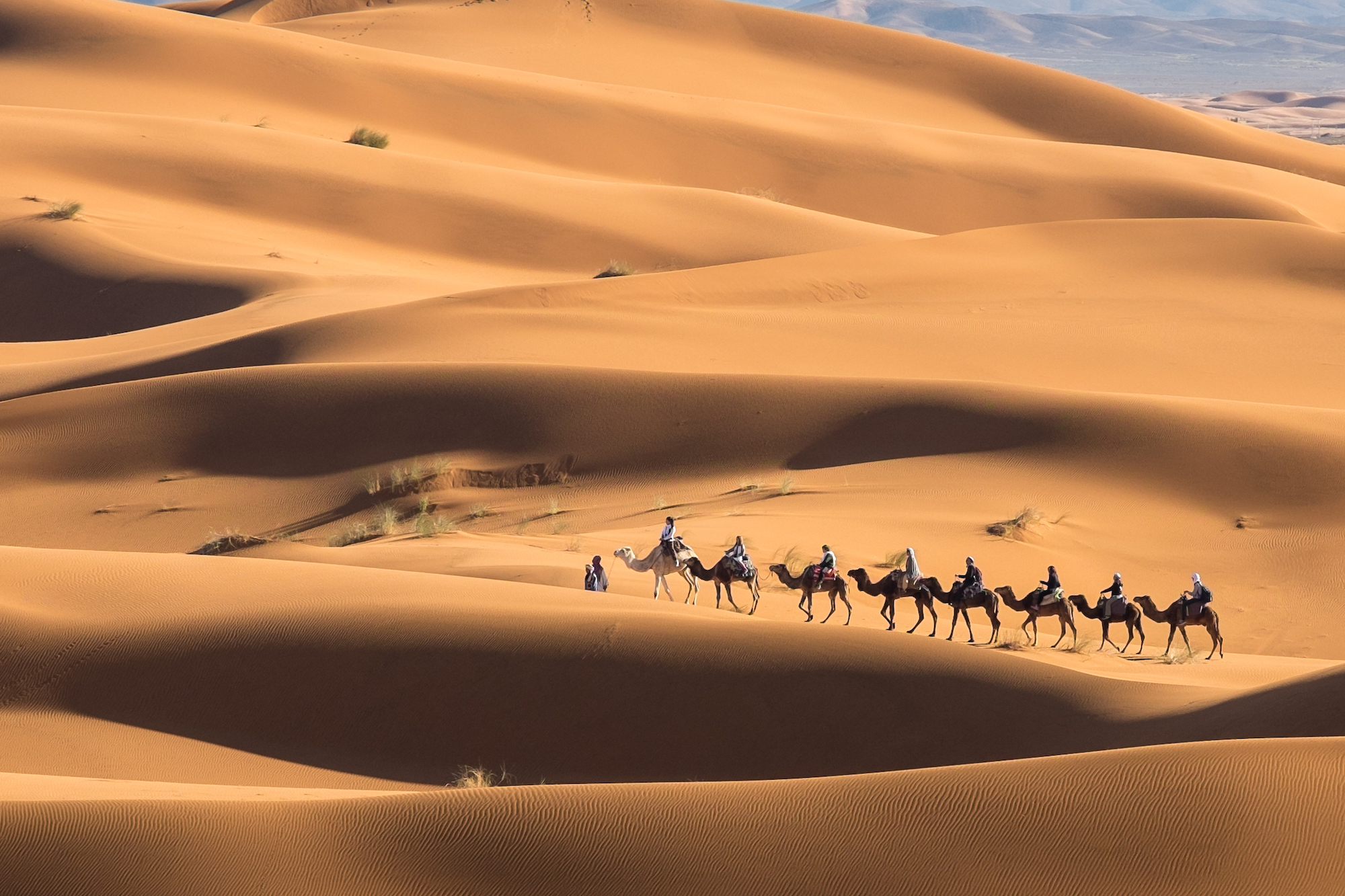 Camel train moving through the Sahara at the end of the solar eclipse.