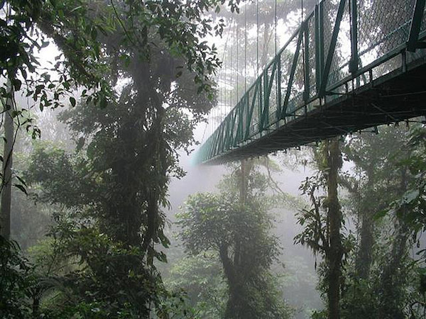 bridge into the cloud forests costa rica