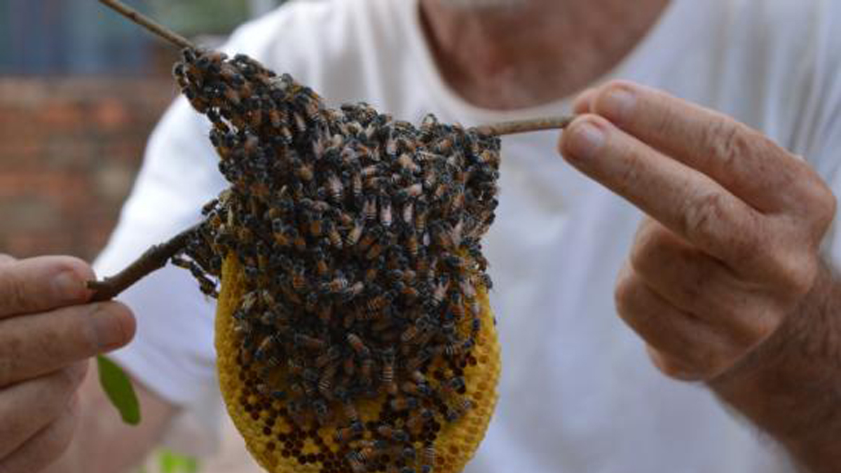 Beekeeping tours are an interesting option to see the surrounding area.