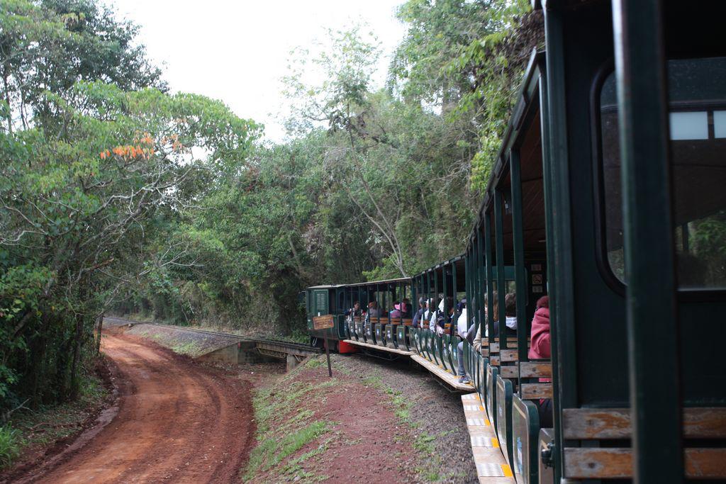 The tren de la selva.