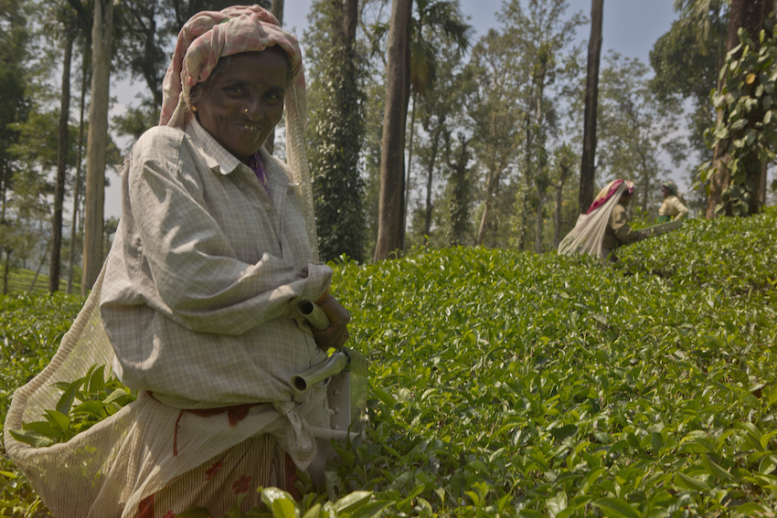 Taking a break for a smile on the Kalpetta Tea Plantation.