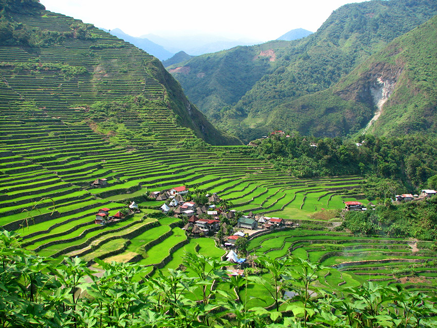 The rice terraces of Banaue.
