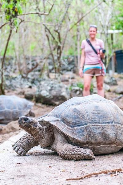 Galápagos Tortoise.